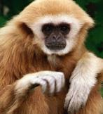 The Hauser Monkey Diet Type